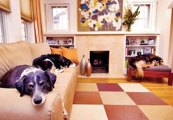 Pet-Friendly Apartments in Boston
