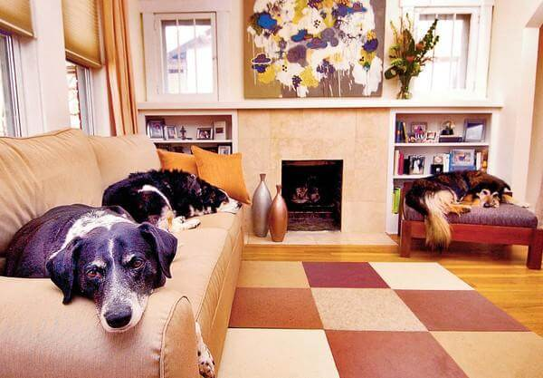 Pet-Friendly Apartments in Boston