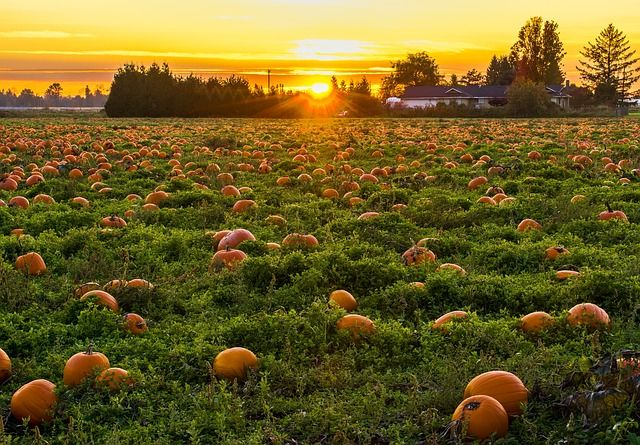 Best Pumpkin Patches Close to Boston