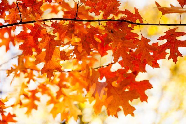 Fall Getaways Near Boston