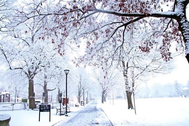 Cambridge Park Covered in Snow