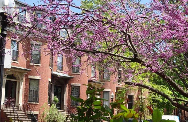 Boston Apartment Renovation