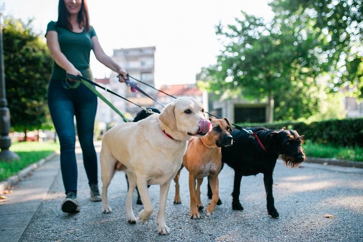side hustle dog walker