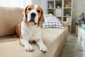 Pet friendly Boston apartment